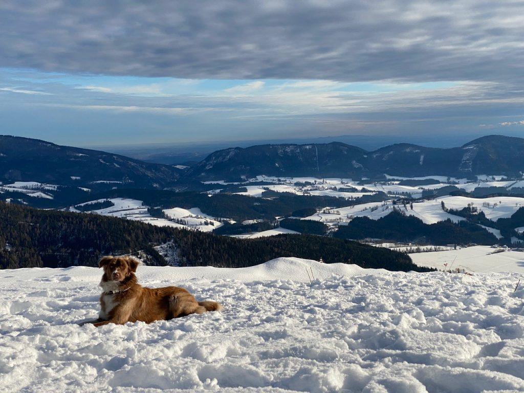 Bergrettung-Steiermark-Lawinensuchhund-Lucy-Matthias-Seper-Weiz_6656